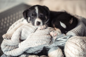ways to keep your dog warm during winter